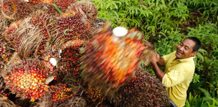 Indonesia Makes Strong Push Towards Biofuel Production, R&D