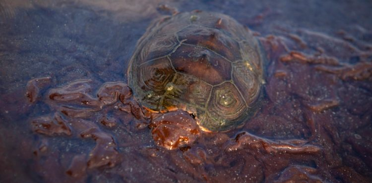 Victims of BP Mexico Gulf Oil Spill Still Suffering