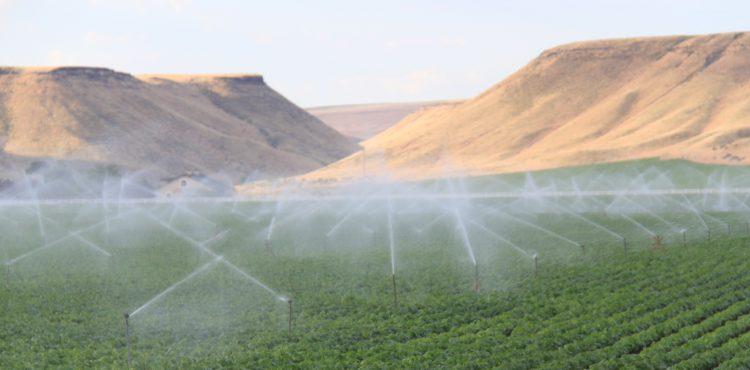 Solar Energy to Irrigate 220,000 Acres in Kom Ombo