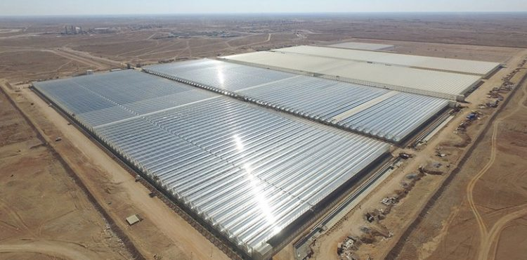 Oman Announce Plans for Second Giant Solar Project